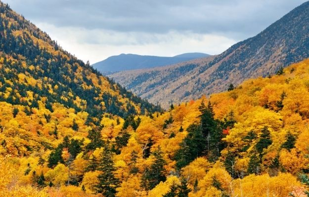 Mountain view with yellow leaf trees in white moutain   white mountains   Fall In Arizona – 4 Perfect Vacation Ideas