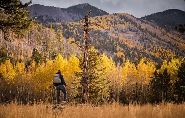 a man is walking through a full of yellow tree forest in flagstaff   Flagstaff   Fall In Arizona – 4 Perfect Vacation Ideas