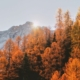 moutain view with autumn leaf tree with the sunlight behind | Feature | Fall In Arizona – 4 Perfect Vacation Ideas