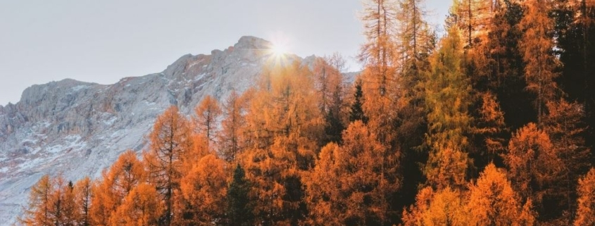 moutain view with autumn leaf tree with the sunlight behind   Feature   Fall In Arizona – 4 Perfect Vacation Ideas